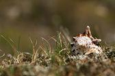 Sea shell in mountain grass — Stock Photo