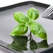 Basil leaves on a plate - Stock Photo