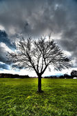 árbol hdr — Foto de Stock