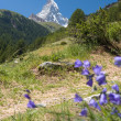 Stock Photo: Matterhorn - Swiss Alps