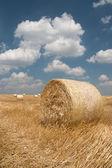 農業 - 干し草の山 — ストック写真