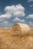 L'agriculture - botte de foin — Photo
