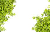 Motyw zieleni — Zdjęcie stockowe