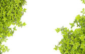 Green nature motive — Stock Photo