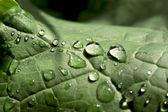 после дождя — Стоковое фото
