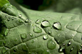 Na regen — Stockfoto
