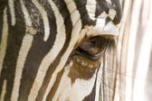 Zebra Eye — Stockfoto