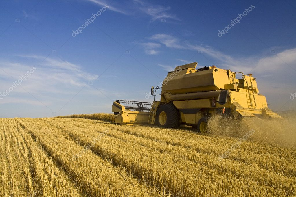 Agriculture - Combine (harvester) on the field — Foto Stock #5917569