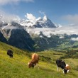 Alps in Switzerland — Stock Photo
