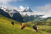 Alps in Switzerland — Foto Stock