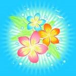 Frangipani flower — Stock Vector