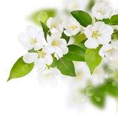 Fresh spring white flowers — Stock Photo