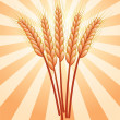 Wheat ears — Stock Vector
