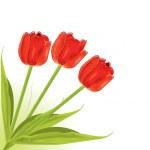 Pretty red tulips — Stock Vector