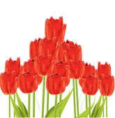 Bunch of tulips isolated on white background — Stock Vector