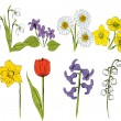 Vector illustration of Spring Flowers set - Stock Vector