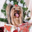 Stock Photo: Christmas present under tree - puppy