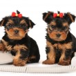 Two puppies sitting by the phone — Stock Photo