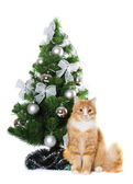 Fluffy cat under Cristmas tree isolated on white — Stock Photo