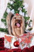 Christmas present under the tree - puppy — Stock Photo
