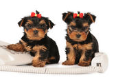 Two puppies sitting by the phone — Stockfoto