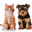 Stock Photo: Little cute puppy and red kitten isolated on white