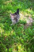 Kitty looking frighten on the loan — Stock Photo