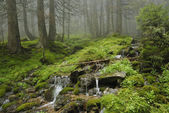 Creek in wild wet Carpathian forest — Stock Photo