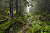 Track in wilde forest — Stock Photo
