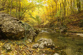 Landscape with mountain river in autumn forest — Stock Photo