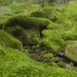 Stock Photo: Mossy background