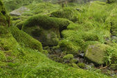 Mossy background — Stock Photo