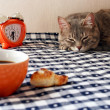 Morning - alarm clock, cup of coffee and drowsiness cat — 图库照片