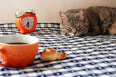 Morning - alarm clock, cup of coffee and drowsiness cat — Stock Photo