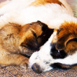 Dog and puppy. - Stock Photo