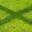 Stock Photo: Shadow on green grass.