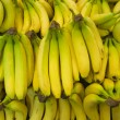 Bunches of bananas — Stock Photo
