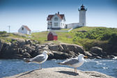 Two seagulls and lighthouse — Stock Photo