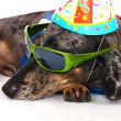 Royalty-Free Stock Photo: A Dog\'s Life Having Fun At A Party