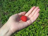Strawberry on woman's palm — Stock Photo