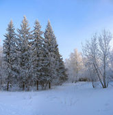Winter park. Frosty trees against blue sky background — Stock Photo