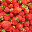 Strawberry close up - berry background - Stock Photo