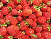 Strawberry close up - berry background — Stockfoto