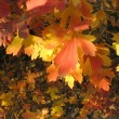 Autumn background - yellow and red leaves — Stock Photo
