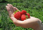 Handful of strawberry on woman's hand — Stock Photo