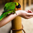 Parrot eating from the hand of a girl — Stock Photo
