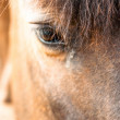 Royalty-Free Stock Photo: Eye of a horse closeup with focus on hair. Lots of copyspace