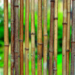 Bamboo background on green blurry background with copyspace — Stock Photo