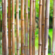 Bamboo with green blurry background — Stock Photo