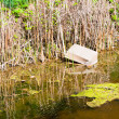 Stock Photo: Polluted water with paper box